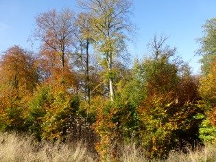 im Lüerwald bei Menden-Oesbern
