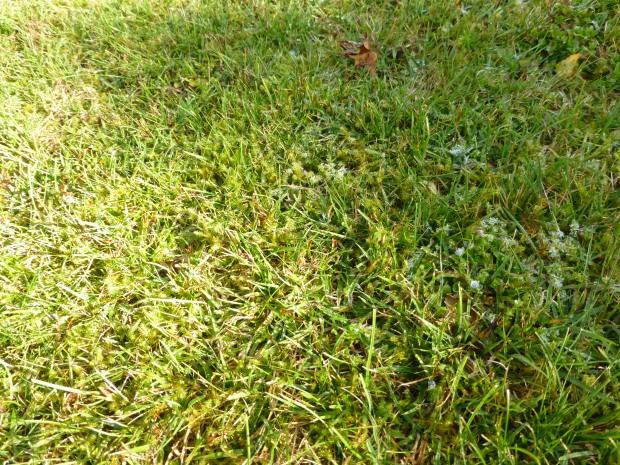Sonne, Schatten, Raureif und letzte Blüten auf Rasen