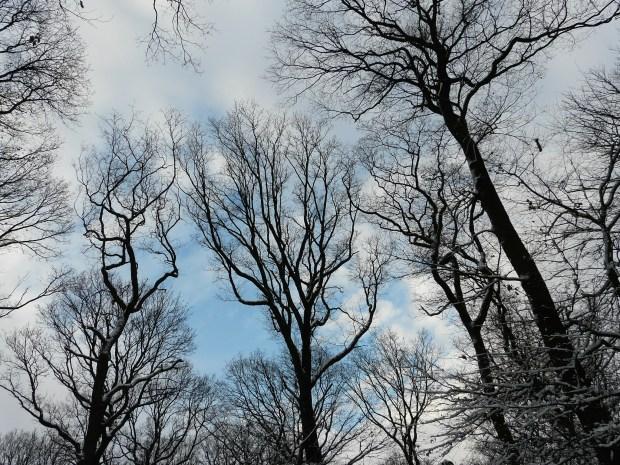 Winterhimmel über Baumkronen