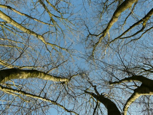 Baumkronen unter blauem Himmel