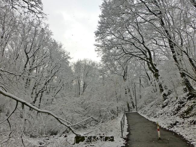 Bäume im Märzschnee