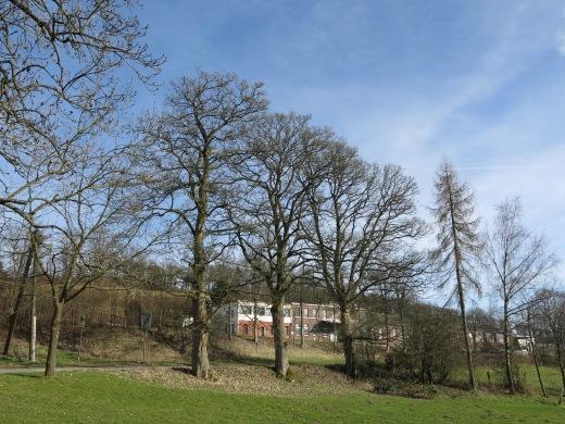 Baumreihe im Frühling vor Blattaustrieb