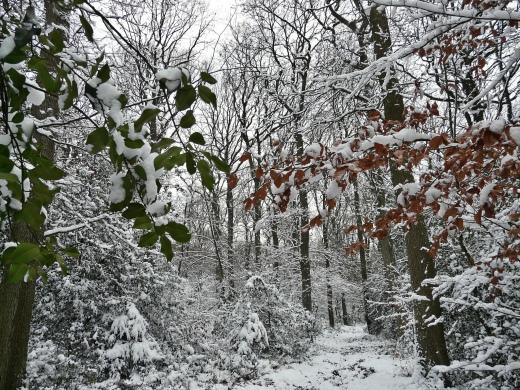 Menden, Stadtwald Waldemei; 13.12.12