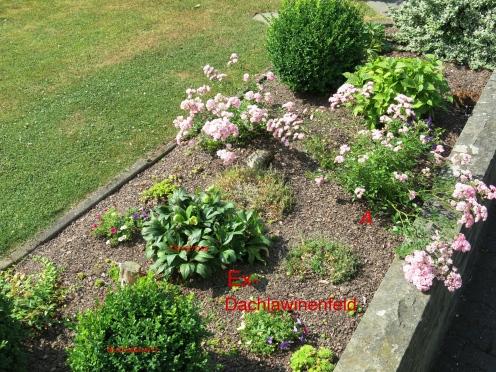 Blumenbeet in Hitze und Trockenheit; 27.07.13