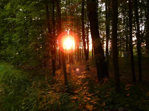 Sonnenuntergang im Laubwald