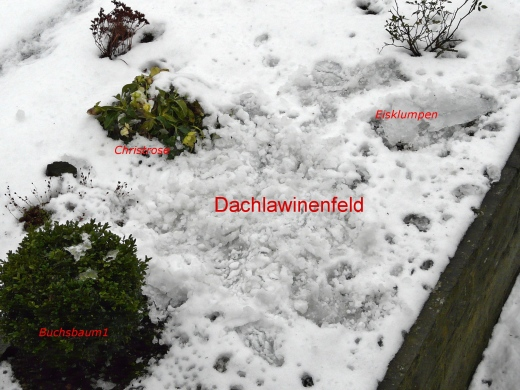 Blumenbeet unter Eis und Schnee; 27.01.13