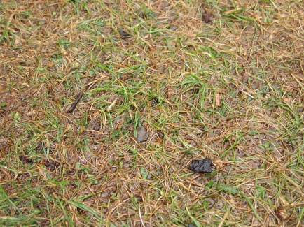 regennasser Rasen