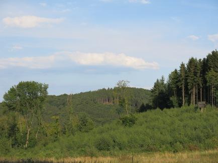 Wald zwischen Mesterscheid und Oese bei Hemer