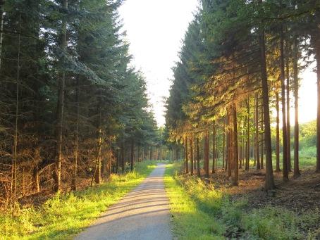 """Menden, im Wald """"Sundern"""""""