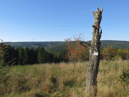 von nördlich Eversberg auf Stimmstamm und Fernmeldeturm im Arnsberger Wald