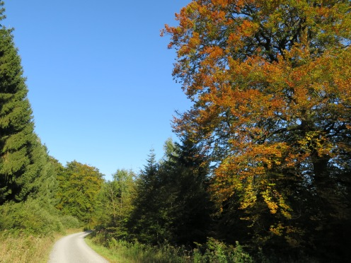 Arnsberger Wald, Plackweg