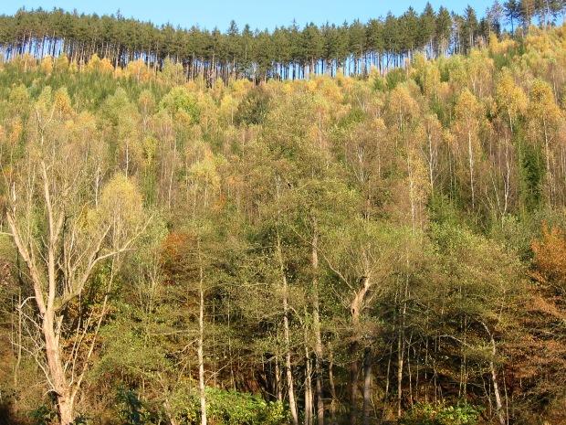 Steilhang über der Ruhr bei Arnsberg-Oeventrop