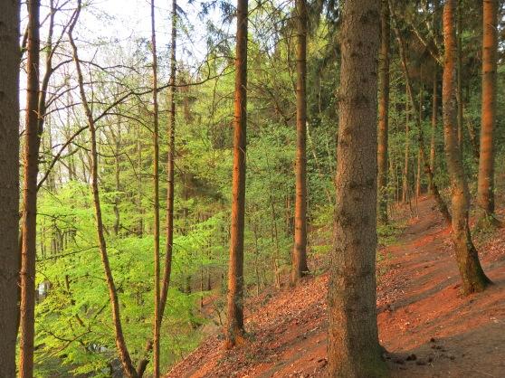 frisches Laubgrün im Nordsauerland; 04.05.13