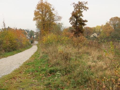 Leitmecke bei Menden/Sauerland; 17.11.13