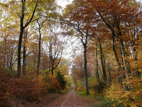 bunter Herbstwald im Wald Sundern bei Menden/Sauerland. 01.11.09