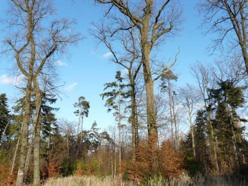 Menden/Sauerland, Wald Sundern; 22.11.09
