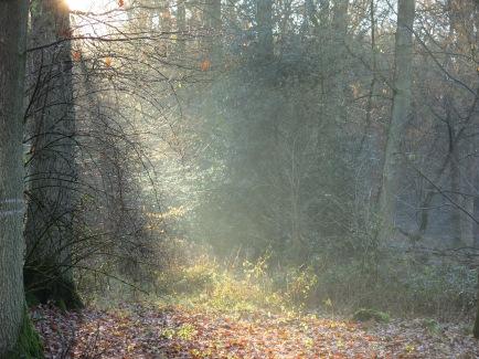Sonnenlicht im Nebel