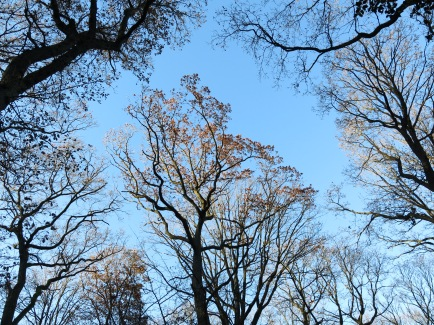 Baumkronen im Mendener Stadtforst Waldemei; 12.12.13