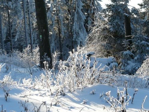 Winter im Balver Wald (Nord-Sauerland); 30.12.10