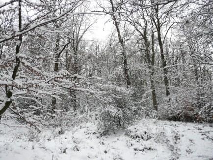 Mendener Stadtforst Waldemei am 12.12.2012