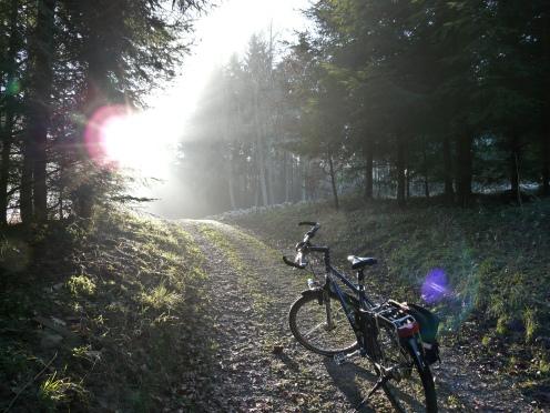 Waldweg bei Hemer (Nordsauerland)
