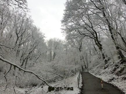 Menden, Hönne, in der Molle; 21.03.13