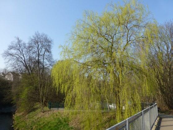 an der Hönne bei Menden/Sauerland; 13.03.2013