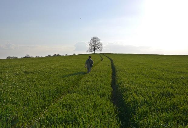 Halinger Heide
