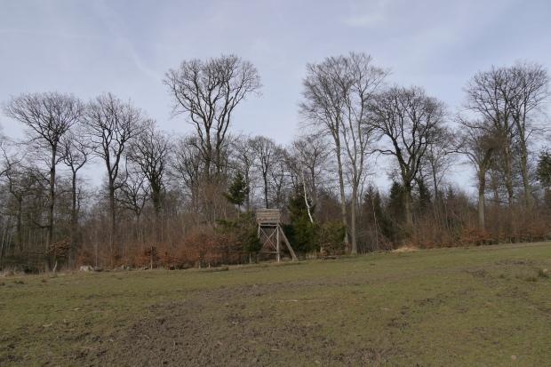 große Lichtung / Wildacker im Lüerwald