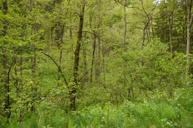 Erlenbruchwald am Langer Bach südlich von Warstein