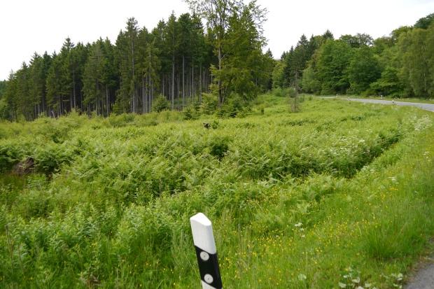 an der L 735 (Bache) südwestlich von Hirschberg