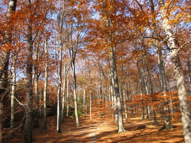 Wald bei Oeventrop