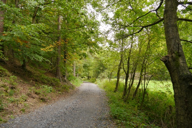 Waldweg am Caller Bach im östl. Iserlohner Stadtwald