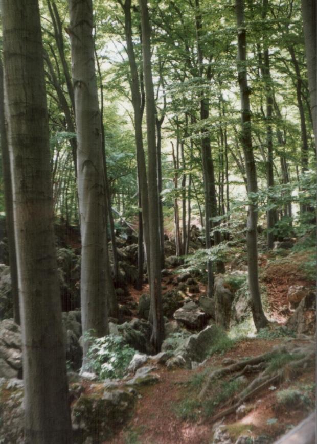 Felsenmeer-1990-1_v1