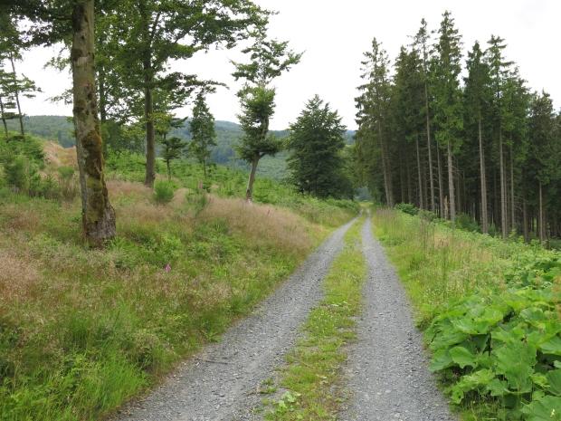 Waldweg am Westhang des Hackelbergs bei Züschen