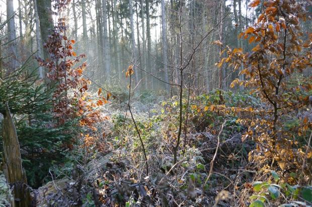 Waldemei, am unteren Hemerschen Weg, Westseite