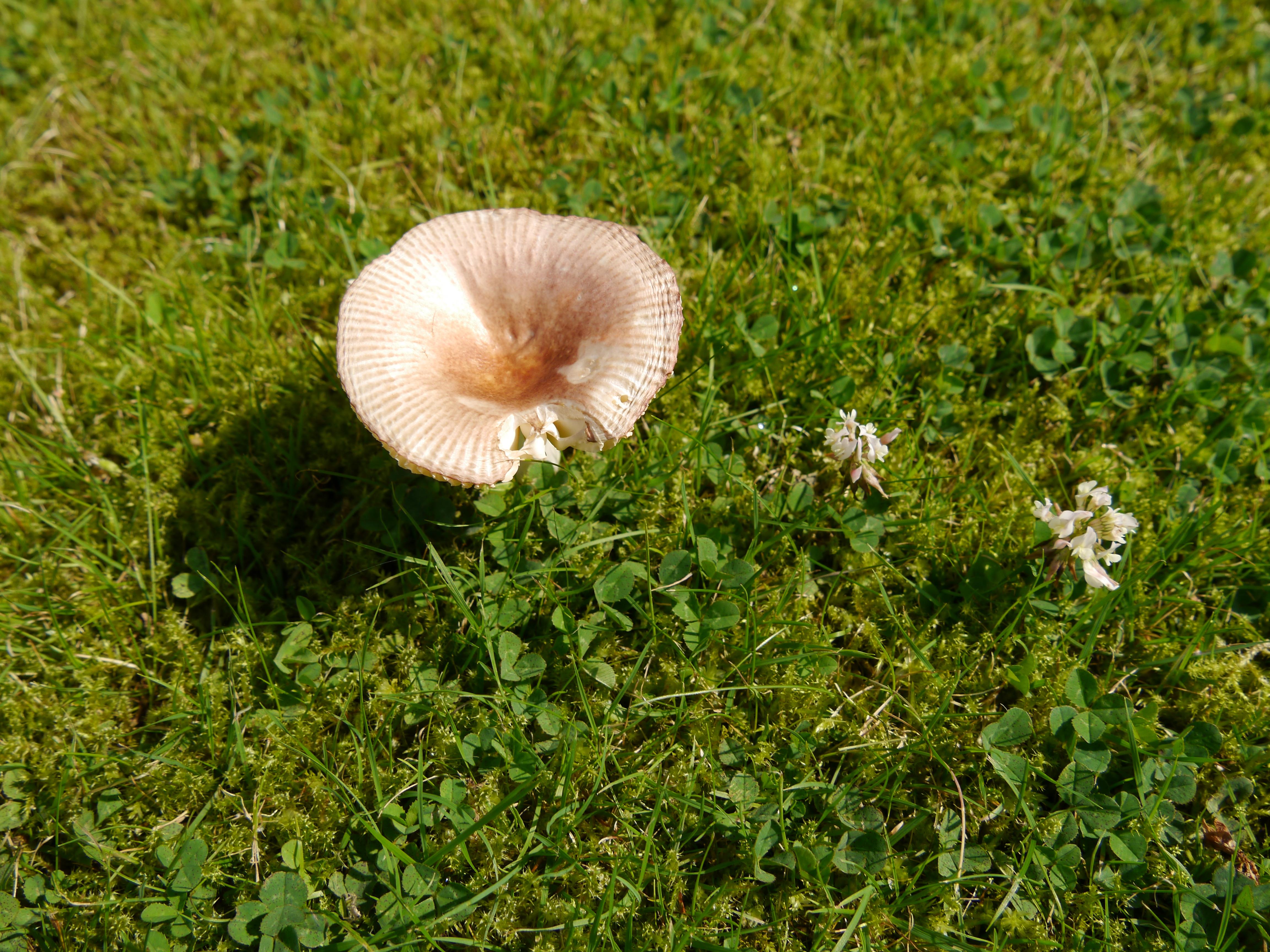 Gut gemocht Pilz im Rasen | Jahrestageszeitenbuch VJ62